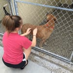 All the dogs in the kennel just loved our visit with them. 150x150 Humane Society of Tampa Bay