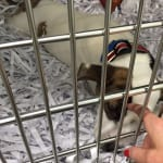 One of the puppies gets a little extra attention. 150x150 Humane Society of Tampa Bay